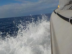 Highlight for Album: Maui Snorkeling 2017